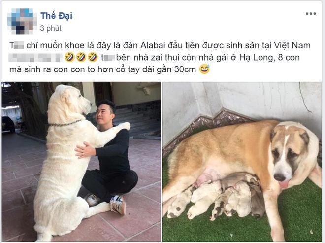 """Chó bố nặng gần 90 kg và đàn chó con hiếm gây sốt"""" mạng xã hội Việt - Ảnh 1."""