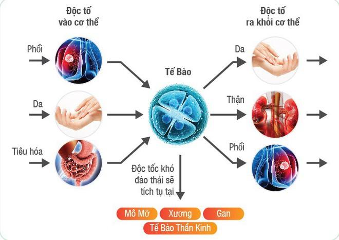 Cơ thể tích tụ quá nhiều chất độc sẽ sinh bệnh nguy hiểm: Đừng bỏ qua 4 cách thải độc này - Ảnh 1.