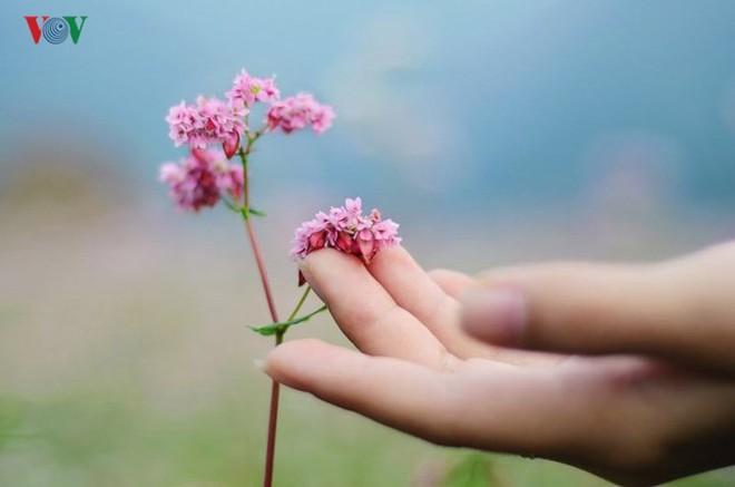 Tới Hà Giang ngắm hoa tam giác mạch đẹp ngất ngây - Ảnh 7.