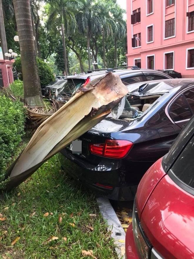Đỗ xe dưới gốc cây dừa, ô tô gặp phải tai họa ít ai ngờ đến! - Ảnh 3.