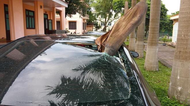 Đỗ xe dưới gốc cây dừa, ô tô gặp phải tai họa ít ai ngờ đến! - Ảnh 1.
