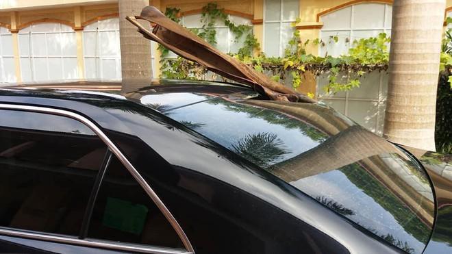 Đỗ xe dưới gốc cây dừa, ô tô gặp phải tai họa ít ai ngờ đến! - Ảnh 2.