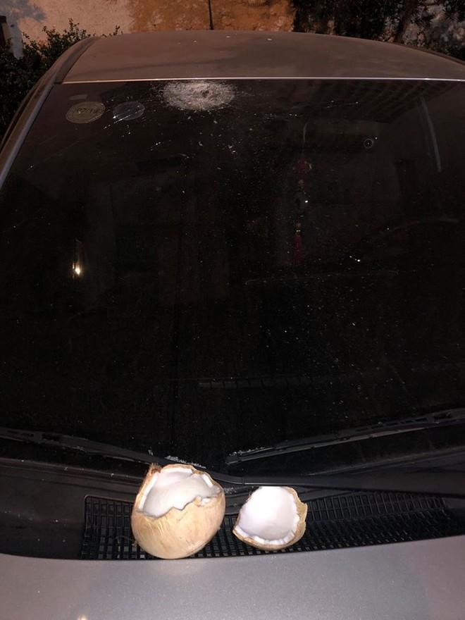 Đỗ xe dưới gốc cây dừa, ô tô gặp phải tai họa ít ai ngờ đến! - Ảnh 4.
