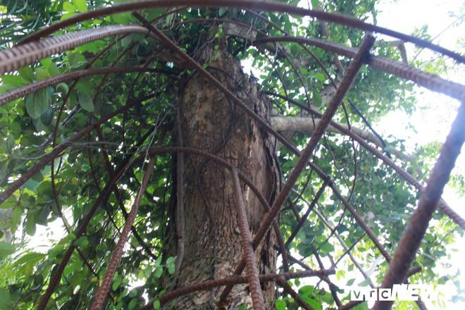 Ly kỳ quanh cây sưa trăm tỷ ở Hà Nội sắp được bán: Tờ giấy đe dọa ném vào nhà dân - Ảnh 1.