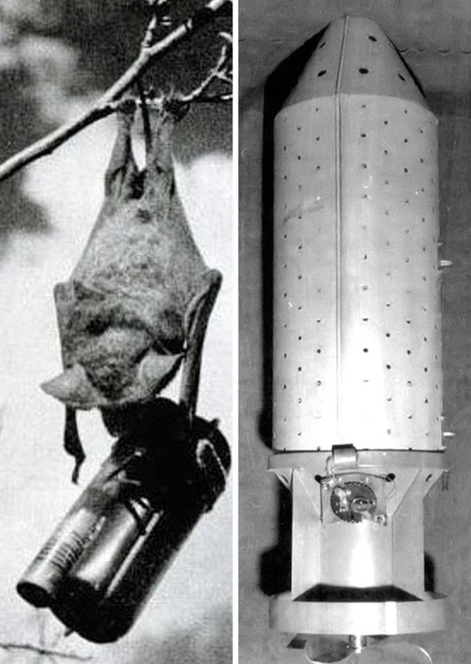 7 sự thật lịch sử ít người biết: Có tiết lộ cả máy bay ném bom thời Thế chiến II của Mỹ - Ảnh 5.