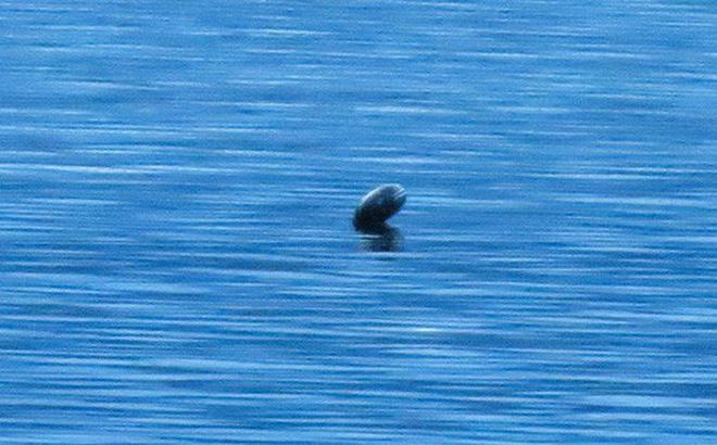 Sinh vật bí ẩn giống quái vật hồ Loch Ness xuất hiện ở hồ nước Canada