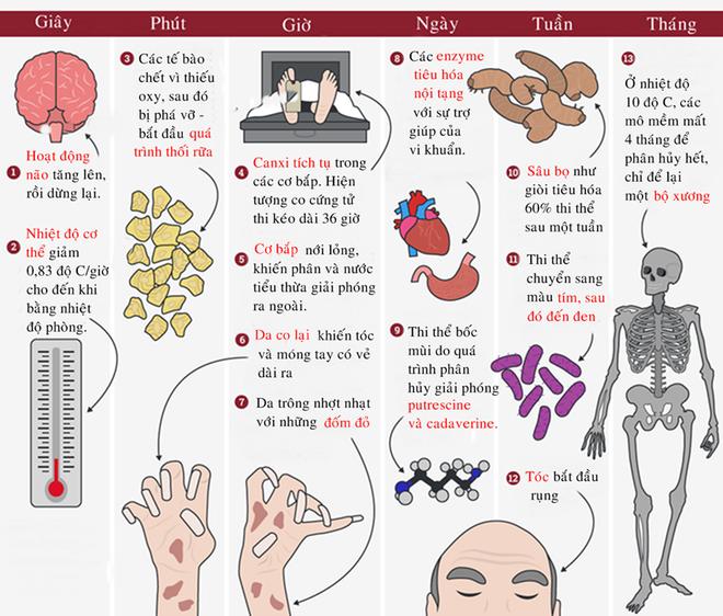 [Infographic] Những biến đổi của cơ thể người sau khi chết - Ảnh 1.