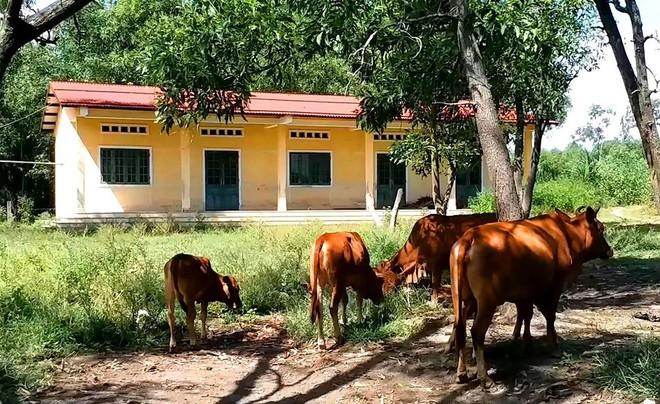 Trường học hàng trăm triệu đồng cho học sinh vùng khó khăn thành nơi… chứa củi, bò phóng uế - Ảnh 2.