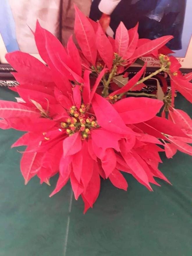 Giáo viên mừng phát khóc khi học trò mang hoa dại, rau cải, chuối tặng ngày 20/11 - Ảnh 3.