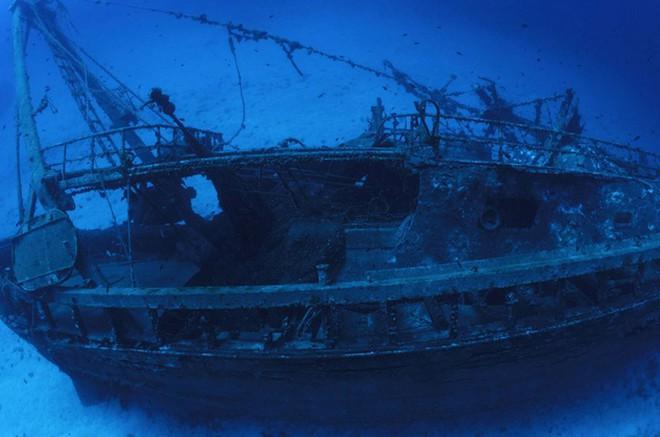 Những phát hiện ngoài sức tưởng tượng chứng minh đại dương là thế giới kỳ dị, bí ẩn - Ảnh 10.