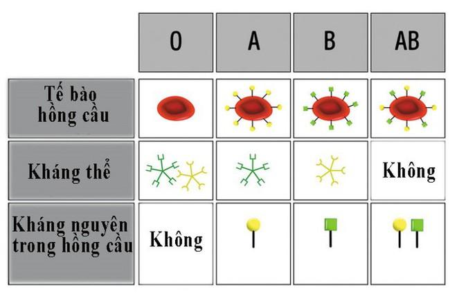 8 điều người nhóm máu O nên biết - Ảnh 2.