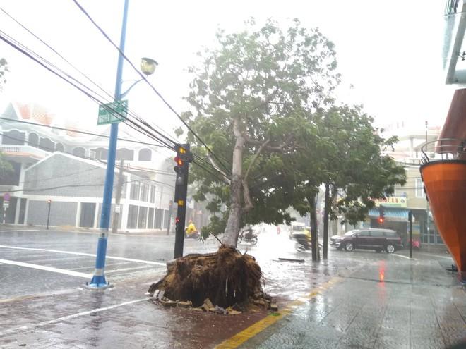 Gió mạnh cấp 8 đổ bộ vào Vũng Tàu, cây xanh gãy đổ hàng loạt - Ảnh 4.