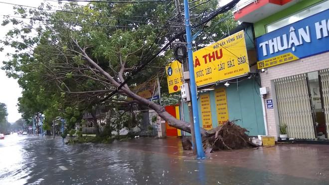Gió mạnh cấp 8 đổ bộ vào Vũng Tàu, cây xanh gãy đổ hàng loạt - Ảnh 3.