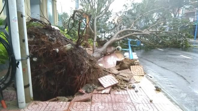 Gió mạnh cấp 8 đổ bộ vào Vũng Tàu, cây xanh gãy đổ hàng loạt - Ảnh 2.