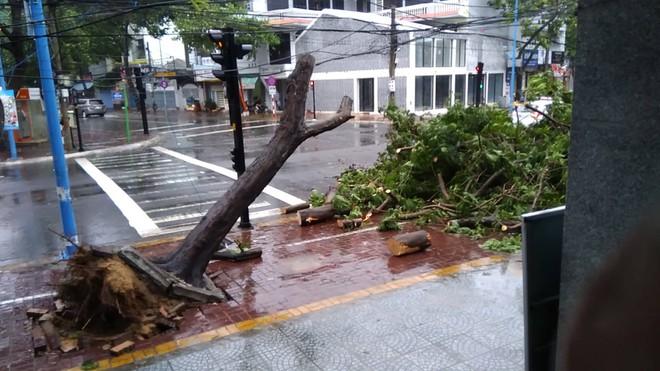 Gió mạnh cấp 8 đổ bộ vào Vũng Tàu, cây xanh gãy đổ hàng loạt - Ảnh 7.