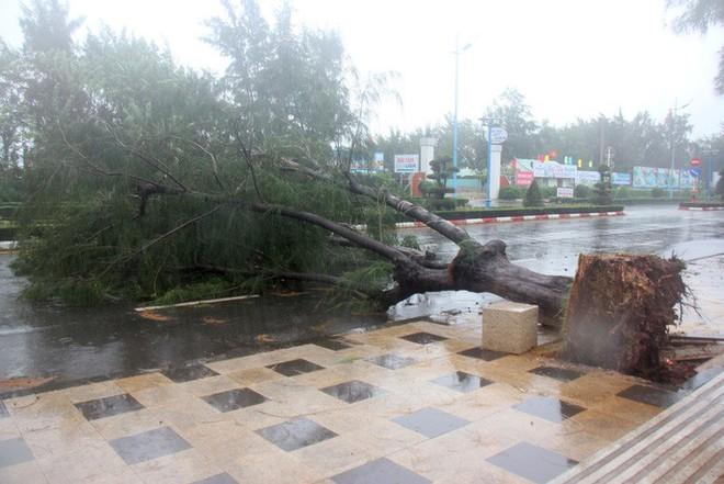 Gió mạnh cấp 8 đổ bộ vào Vũng Tàu, cây xanh gãy đổ hàng loạt - Ảnh 5.