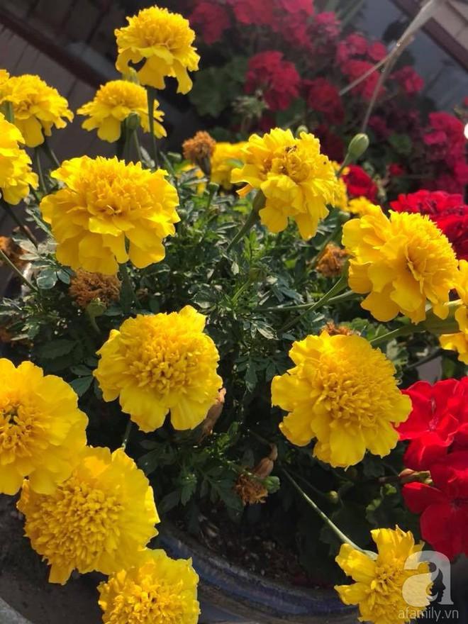 Để chiều lòng vợ, chồng Mỹ thiết kế khu vườn trồng đủ các loại hoa và rau quả Việt để vợ đỡ nhớ quê hương - Ảnh 16.