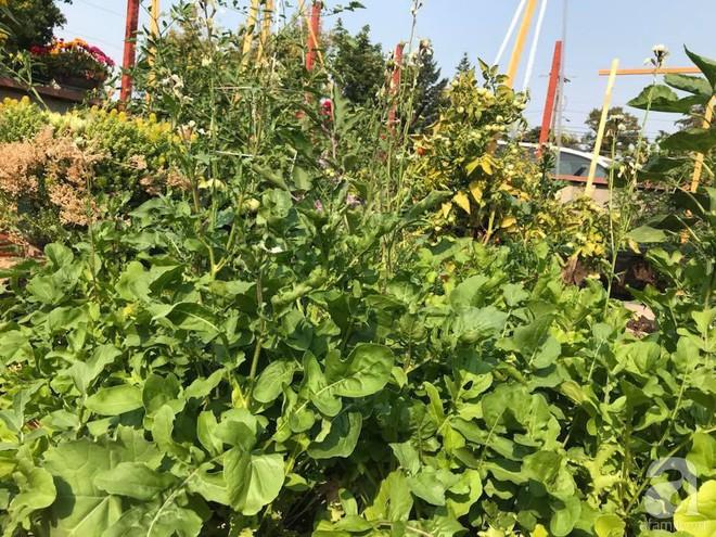 Để chiều lòng vợ, chồng Mỹ thiết kế khu vườn trồng đủ các loại hoa và rau quả Việt để vợ đỡ nhớ quê hương - Ảnh 25.