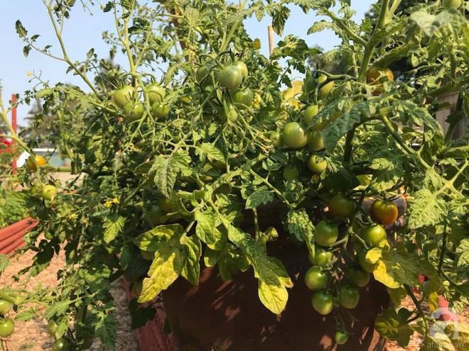 Để chiều lòng vợ, chồng Mỹ thiết kế khu vườn trồng đủ các loại hoa và rau quả Việt để vợ đỡ nhớ quê hương - Ảnh 26.