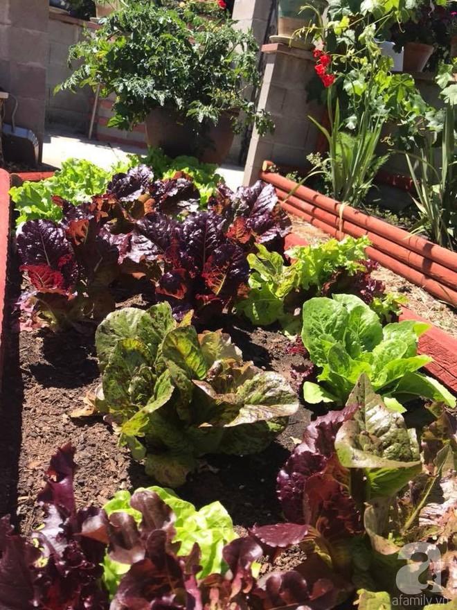 Để chiều lòng vợ, chồng Mỹ thiết kế khu vườn trồng đủ các loại hoa và rau quả Việt để vợ đỡ nhớ quê hương - Ảnh 28.