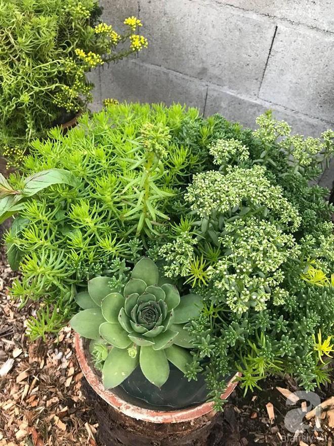 Để chiều lòng vợ, chồng Mỹ thiết kế khu vườn trồng đủ các loại hoa và rau quả Việt để vợ đỡ nhớ quê hương - Ảnh 31.