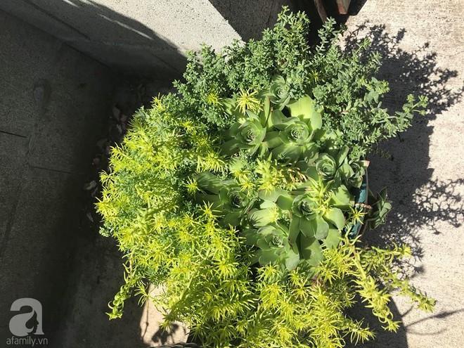 Để chiều lòng vợ, chồng Mỹ thiết kế khu vườn trồng đủ các loại hoa và rau quả Việt để vợ đỡ nhớ quê hương - Ảnh 32.