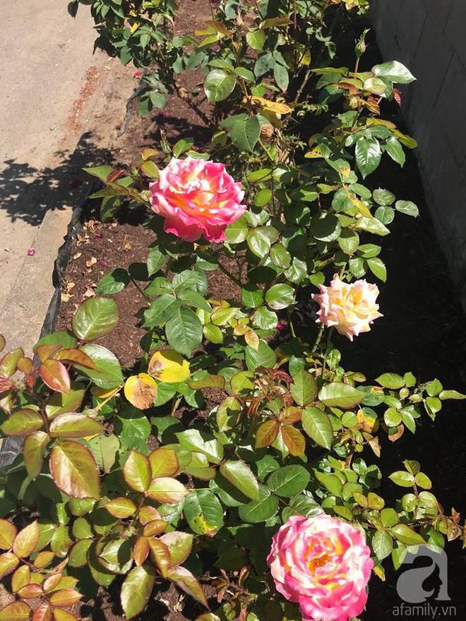 Để chiều lòng vợ, chồng Mỹ thiết kế khu vườn trồng đủ các loại hoa và rau quả Việt để vợ đỡ nhớ quê hương - Ảnh 33.
