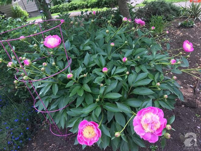 Để chiều lòng vợ, chồng Mỹ thiết kế khu vườn trồng đủ các loại hoa và rau quả Việt để vợ đỡ nhớ quê hương - Ảnh 35.