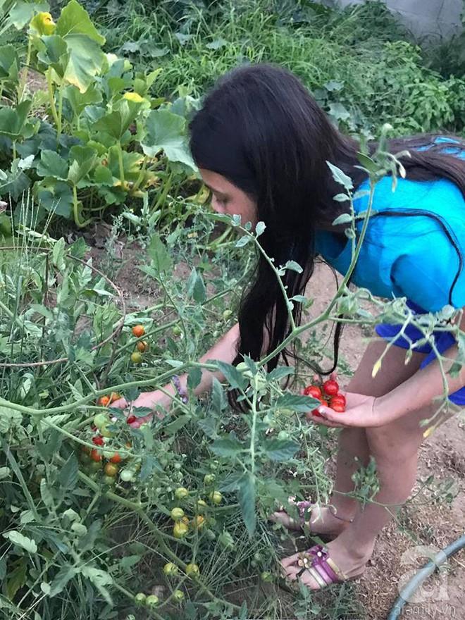 Để chiều lòng vợ, chồng Mỹ thiết kế khu vườn trồng đủ các loại hoa và rau quả Việt để vợ đỡ nhớ quê hương - Ảnh 36.