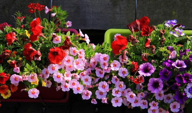 Ngôi làng không có đường đi, nhà nào nhà đó tràn ngập hoa tươi, đẹp như trong cổ tích - Ảnh 14.