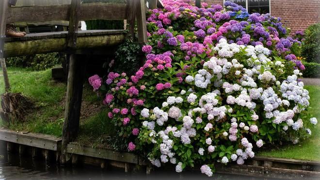 Ngôi làng không có đường đi, nhà nào nhà đó tràn ngập hoa tươi, đẹp như trong cổ tích - Ảnh 15.