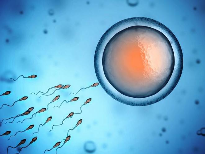 Tinh trùng yếu: Hệ lụy và giải pháp cải thiện chất lượng tinh binh qua phương pháp Đông Tây y phối hợp - Ảnh 3.