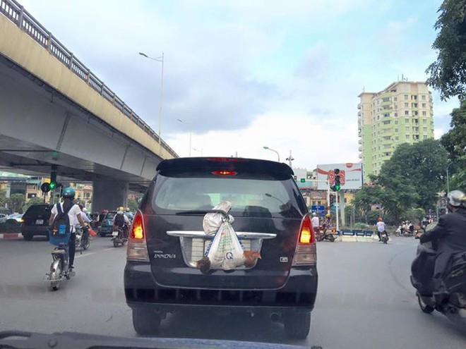 Đôi gà trống treo lủng lặng sau ô tô khiến bao người phải ngoái nhìn - Ảnh 2.
