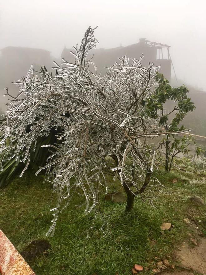 Hình ảnh băng tuyết bao phủ đỉnh Mẫu Sơn trong ngày rét đỉnh điểm - Ảnh 1.