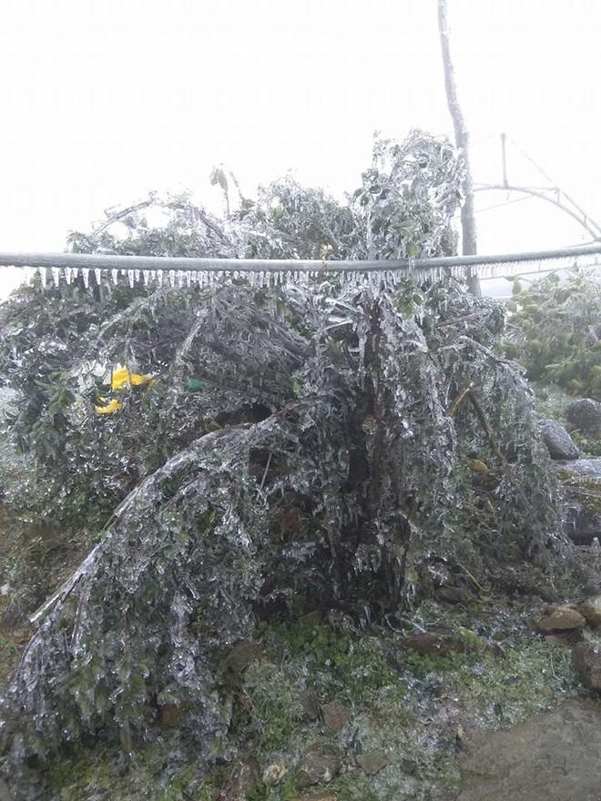 Hình ảnh băng tuyết bao phủ đỉnh Mẫu Sơn trong ngày rét đỉnh điểm - Ảnh 13.