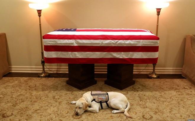 24h qua ảnh: Chú chó trung thành nằm bên linh cữu cố Tổng thống Mỹ George H.W. Bush