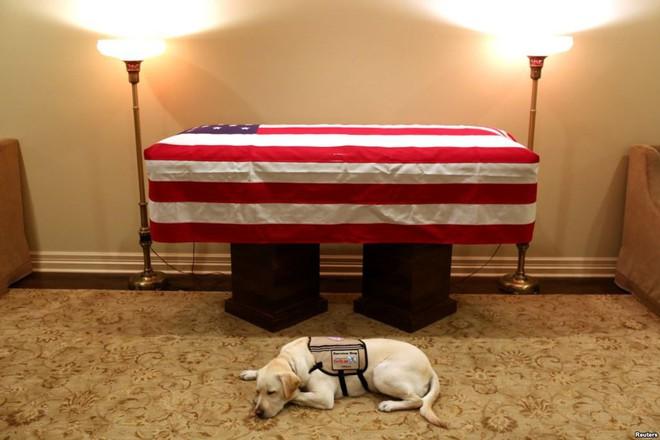 24h qua ảnh: Chú chó trung thành nằm bên linh cữu cố Tổng thống Mỹ George H.W. Bush - Ảnh 4.