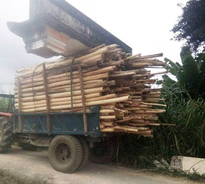 Xe công nông chở keo khiêng luôn cổng làng ở Quảng Nam - Ảnh 1.