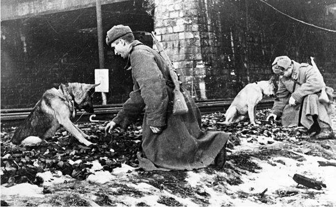 Mèo và lạc đà - những chiến binh đã giúp người lính Liên Xô thắng Thế chiến II như thế nào? - ảnh 1