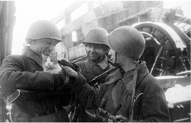 Mèo và lạc đà - những chiến binh đã giúp người lính Liên Xô thắng Thế chiến II như thế nào? - ảnh 3