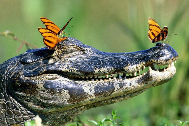 Tan chảy với loạt ảnh về tình yêu mù quáng của các con vật không cùng giống loài - Ảnh 15.