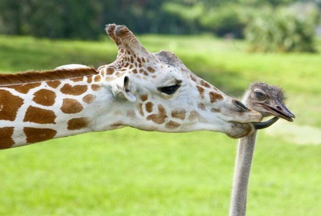 Tan chảy với loạt ảnh về tình yêu mù quáng của các con vật không cùng giống loài - Ảnh 18.