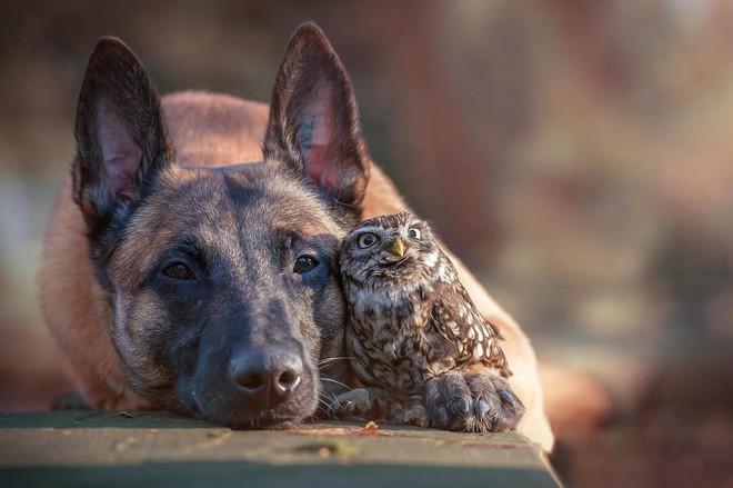 Tan chảy với loạt ảnh về tình yêu mù quáng của các con vật không cùng giống loài - Ảnh 4.