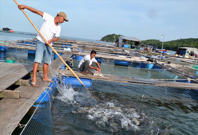 Nghề nuôi cá bạc tỷ ở Sơn Hải - Ảnh 9.