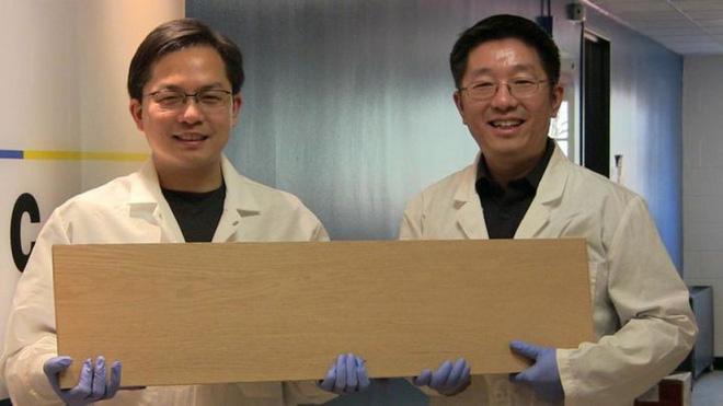 Các nhà khoa học Mỹ đã tìm ra cách biến gỗ cứng như thép - Ảnh 1.