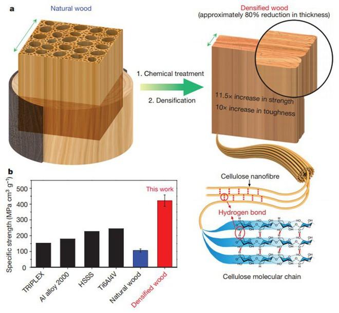 Các nhà khoa học Mỹ đã tìm ra cách biến gỗ cứng như thép - Ảnh 2.