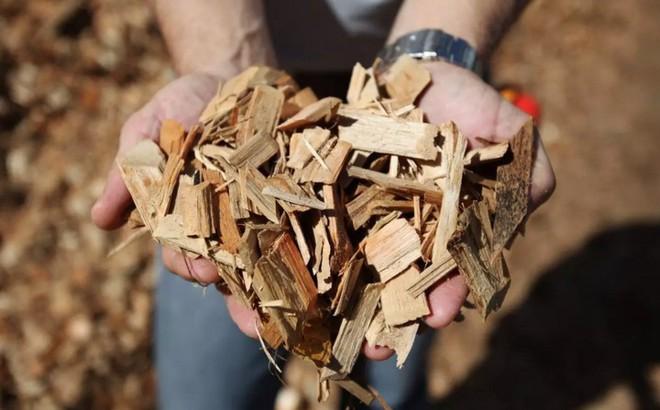 Các nhà khoa học Mỹ đã tìm ra cách biến gỗ cứng như thép