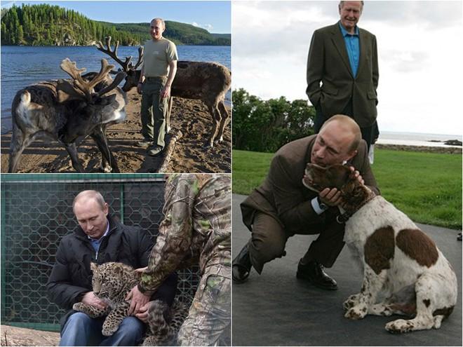Tiết lộ bí mật thú vị về những chú chó của Tổng thống Nga Putin - Ảnh 6.