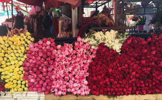 Hoa tươi đắt kỷ lục, cháy hàng trong dịp Valentine