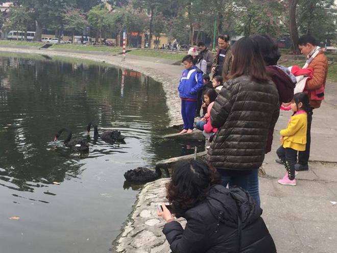 Chia 5 ca trực 24/24 để bảo vệ thiên nga ở hồ Thiền Quang suốt dịp nghỉ Tết  - Ảnh 1.